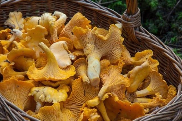 В Ярском районе прошёл грибной фестиваль «Губи-Fest»
